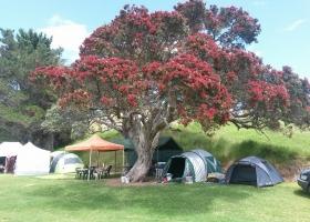 Motutara Barrons Camping Whananaki (8)